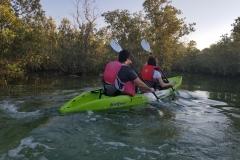 kayaking the Mangroves in Abu Dhabi